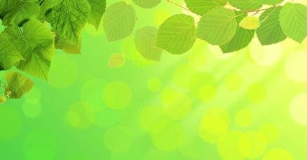 green leaves over green nature summer day background